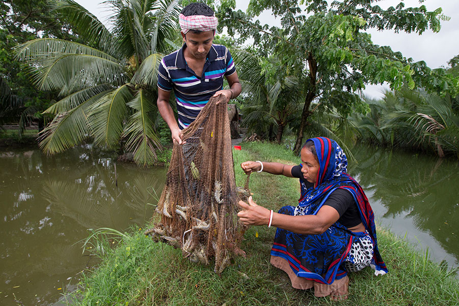 Fish farmers catching shrimp in Khulna, Bangladesh. Photo by Yousuf Tushar. July 31, 2015