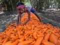 carrot-farmer