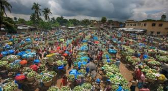 Wholesale mangoes market