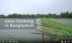 Gher Farming In Bangladesh