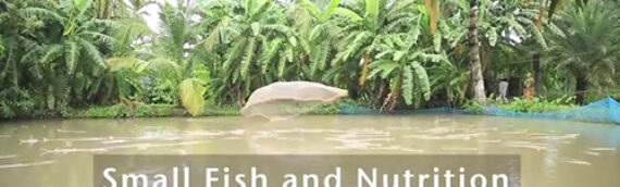 Small fish and nutrition in Bangladesh