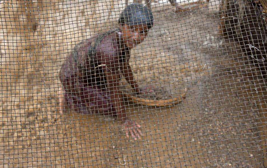 2_child_labor_at_bholagonj_stone_quarry_field