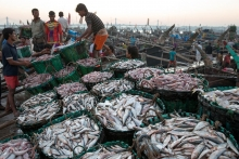 UNLOADING FISHES