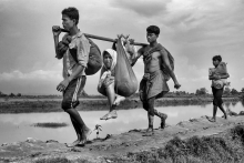 Siblings are carry their mother by hanging with bamboo during thousands of Rohingyas were crossing the border between Myanmar and Bangladesh after Burmese army started an operation against the Rohingyas by killing, rapeing and burning their homes in the Rakhine state of Myanmar. As of December 2017, an estimated 6,55,000 Rohingya people fled to Bangladesh.