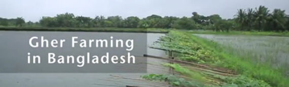 Gher Farming In Bangladesh